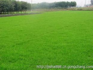 成都化验土壤找GSI检测