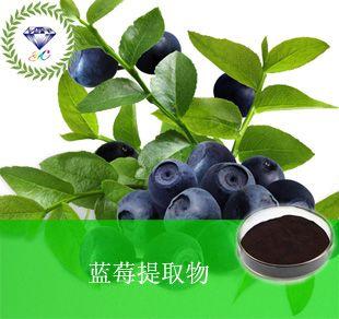 蓝莓提取物  厂家直销 低价批发