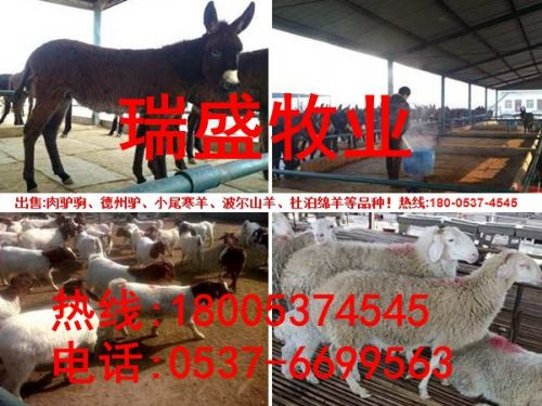 毛驴养殖效益|肉驴苗价格走势|改良肉驴驹多少钱一头