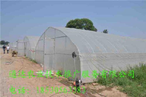 供应唐山简易大棚实施方案几字钢温室建设成本