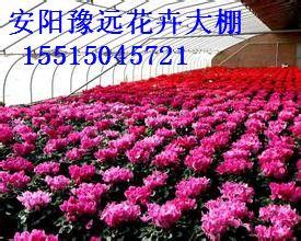 花卉大棚建设方法郑州新乡最先进的温室建造技术