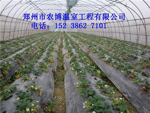 建一个双层膜草莓大棚价格是多少