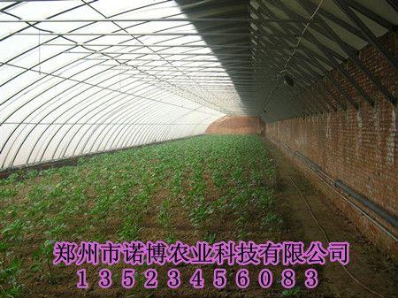 高温大棚建造结构图,草莓,温室大棚供应