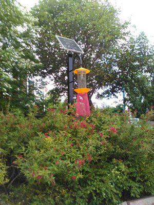 太阳能杀虫灯厂家|农用太阳能杀虫灯价格