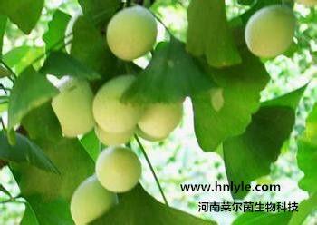 白果内酯 植物提取物 标准品 对照品