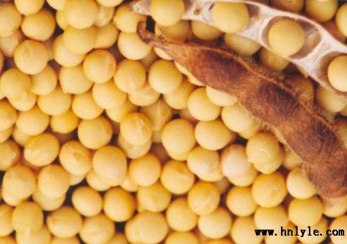 大豆低聚糖 植物提取物 标准品 对照品