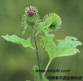 牛蒡子苷 植物提取物 标准品 对照品
