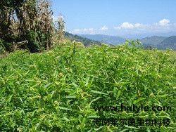 穿心莲内酯 植物提取物 标准品 对照品