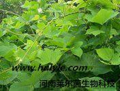 葛根素 葛根黄素 植物提取物 标准品 对照品