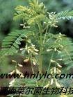 苦参碱 植物提取物 标准品 对照品