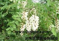 异鼠李素 植物提取物 标准品 对照品