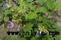 丹参提取物 植物提取物 标准品 对照品