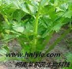 芹菜素 植物提取物 标准品 对照品