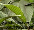 厂家直销 熊果酸98% 高纯度 植物提取物