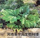 厂家直销  大黄素98% 高纯度 植物提取物