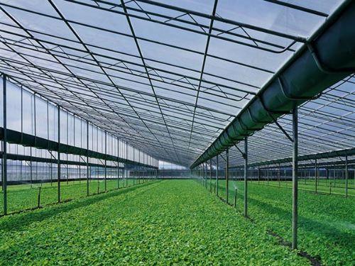钢结构温室大棚建造 苏州薄膜温室安装 苏州经济连栋大棚  苏州葡萄连