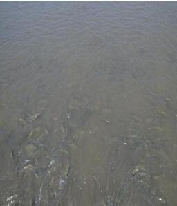 供应合肥浑水处理、芜湖浑水处理、马鞍山浑水处理