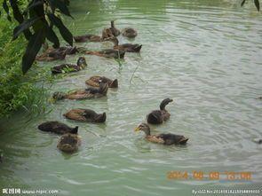 供应浙江杭州池塘水养护、宁波池塘水养护、温州池塘水养护