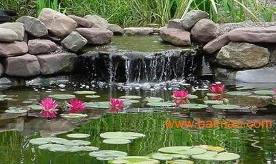 供应浙江杭州景观水除藻、景观水除藻、温州景观水除藻