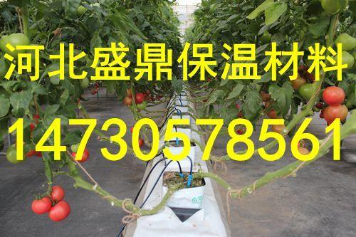 郑州盛鼎源国内唯一一家生产农用岩棉栽培基质农业岩棉