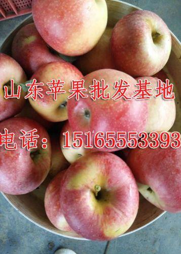 15165553393,山东红星苹果批发价格/山东嘎啦苹果代收联系电话