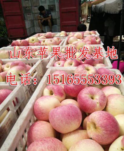 15165553393,山东苹果批发哪家好/山东红星苹果基地价格
