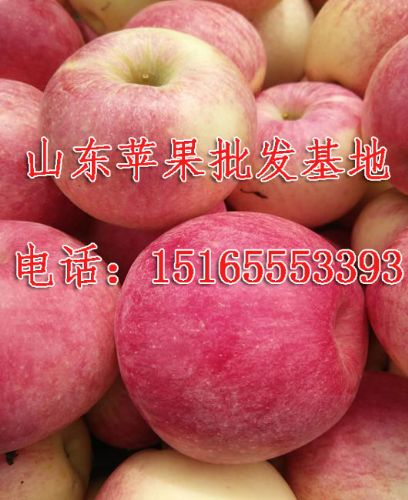 15165553393,山东红将军苹果批发基地/烟台红富士苹果批发商