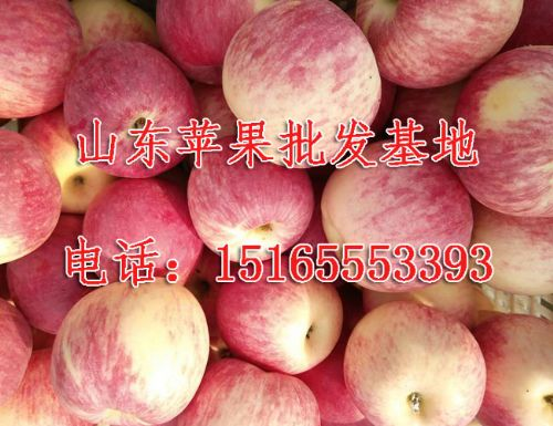 ,山东红星苹果代收联系电话/山东红将军苹果批发厂家