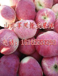 山东金帅苹果种植基地,山东金帅苹果价格