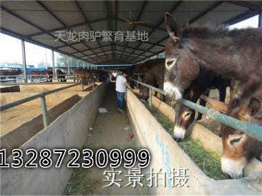 养殖肉驴常用饲料的调制