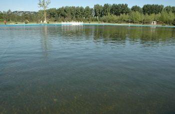 贵州泳池景观水净化设备污水净化设备