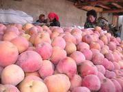 供应苹果 红富士苹果 运城苹果 水果苹果价格