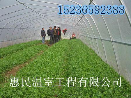 开封大棚温室造价 蔬菜大棚设计 多肉植物大棚