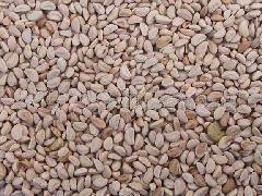 供应山楂种籽