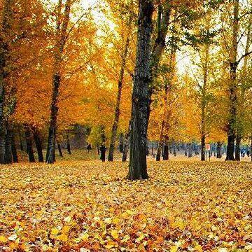 西安昌岳现货供应桦树叶提取物