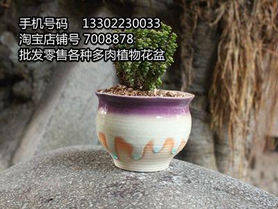 潮州花盆厂家批发各种多肉植物流釉花盆