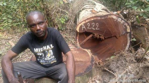 非洲进口木材专业清关