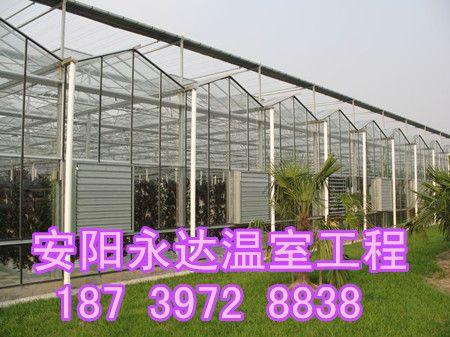 商丘大棚骨架造价信阳阳光板温室大棚规划建造团队