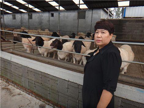 黔西南州黑头杜泊羊养殖效益