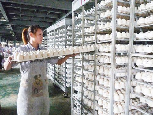 鸿翔精选樱桃谷鸭种蛋批发,受精率高