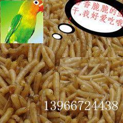 五谷虫蝇蛆干鸟食原料 钓鱼饵料 质量保证 免费磨粉