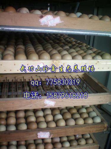 临夏州脱温七彩山鸡苗珍禽养殖孵化基地 低价脱温七彩山鸡苗买到就是
