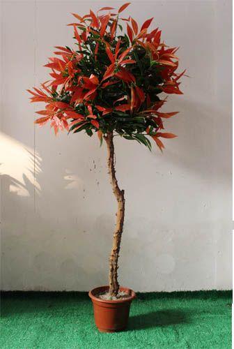 仿真茶花树 玉兰花树制作 红车木造景