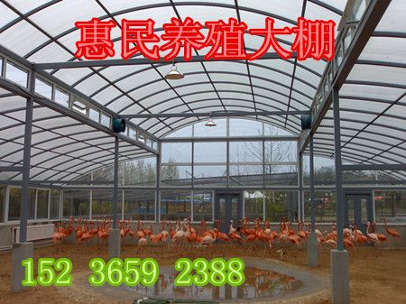 郑州新型养殖大棚 养鸡大棚 信阳肉鸽养殖大棚建设