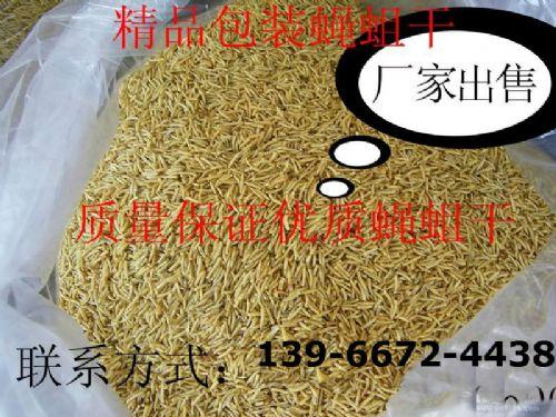 无菌蝇蛆干、蛆虫干、苍蝇昆虫干 纯麦麸养殖 高蛋白饲料