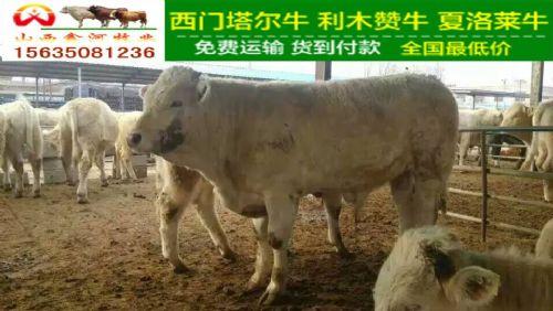2016年养牛补贴,富中国百姓!|肉牛养殖专业肉牛养殖场
