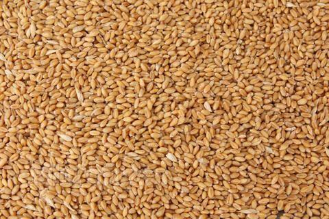 求购玉米,高粱,小麦等