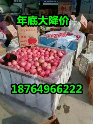 今日山东冷库红富士苹果价格
