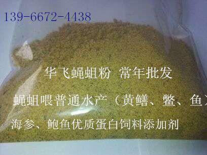 水产高产育苗饵料-蝇蛆、蝇蛆干粉作蛋白质饲料价格