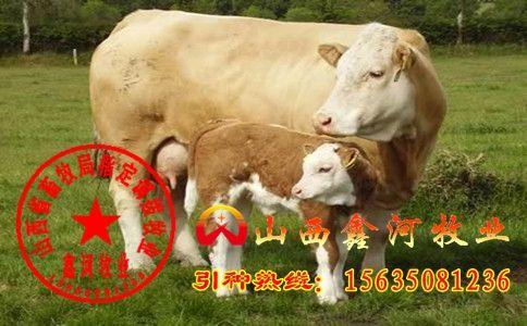 肉牛饲料配制及配方